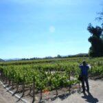 Tour Marques de Casa Concha, Concha y Toro, vinícola, vinho, tour Santiago do Chile, Lucero Travel, LikeChile