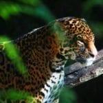 Buin zoo, zoologico Chile, Viagem Chile tour, Likechile