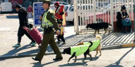 cachorros de rua, curiosidades sobre Chile