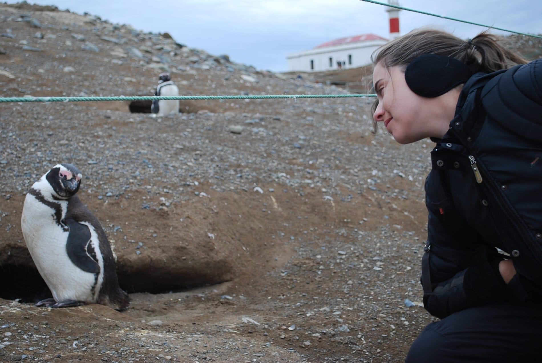Pinguins Isla Magdalena Punta Arenas