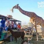 Parque Safari Chile, Cómo chegar, valores, preços