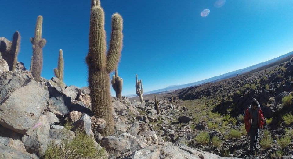 Trekking Valle de los Cactos Atacama