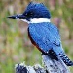Observação de Aves