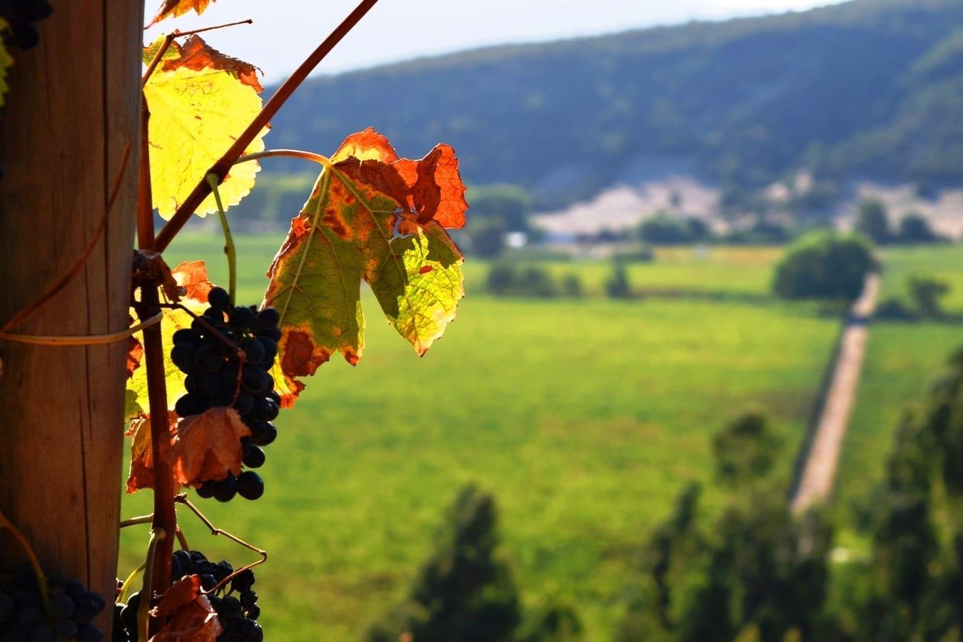 Tour em Santa Cruz, Colchagua Chile a rota dos vinhos, LikeChile, Vinho Chile